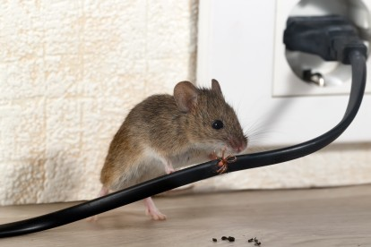 Pest Control in Hornsey, N8. Call Now! 020 8166 9746