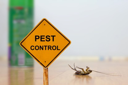 Pest Contol in Hornsey, N8. Call Now 020 8166 9746